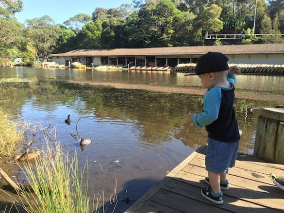 Audley feeding ducks