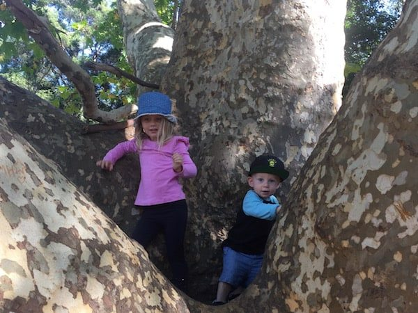Audley kids climbing trees
