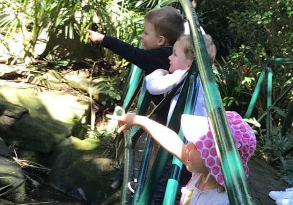 Camellia Gardens Kids