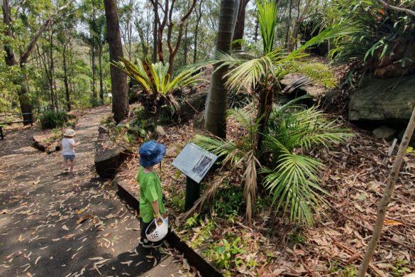 Scavenger hunt at Sir Joseph banks reserve Kareela -2mb
