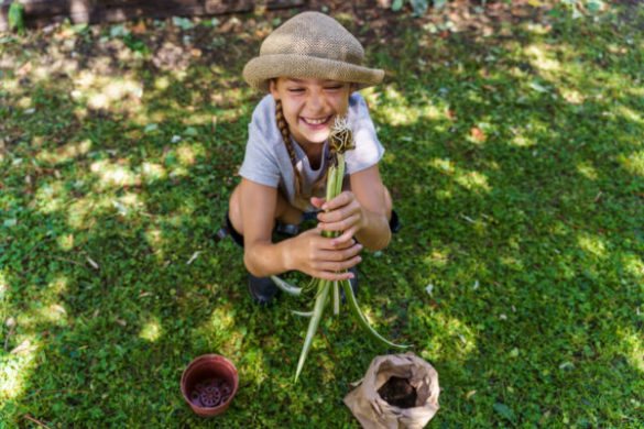 Cheerful little kid about to transplant a spider plant root in a pot.