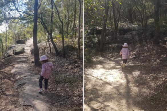 Bonnet Bay bush walk