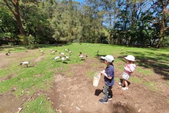Camellia Gardens feeding birds