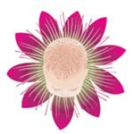 Natural Beginnings – Holistic Health, Doula and Placenta Services